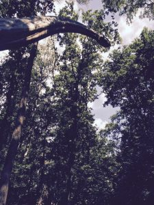 Dagje uit naar het DinoPark in Dierenpark Amersfoort
